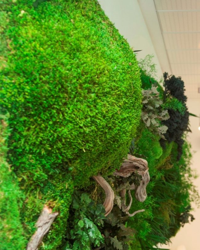 Detalles-green-office-greenarea