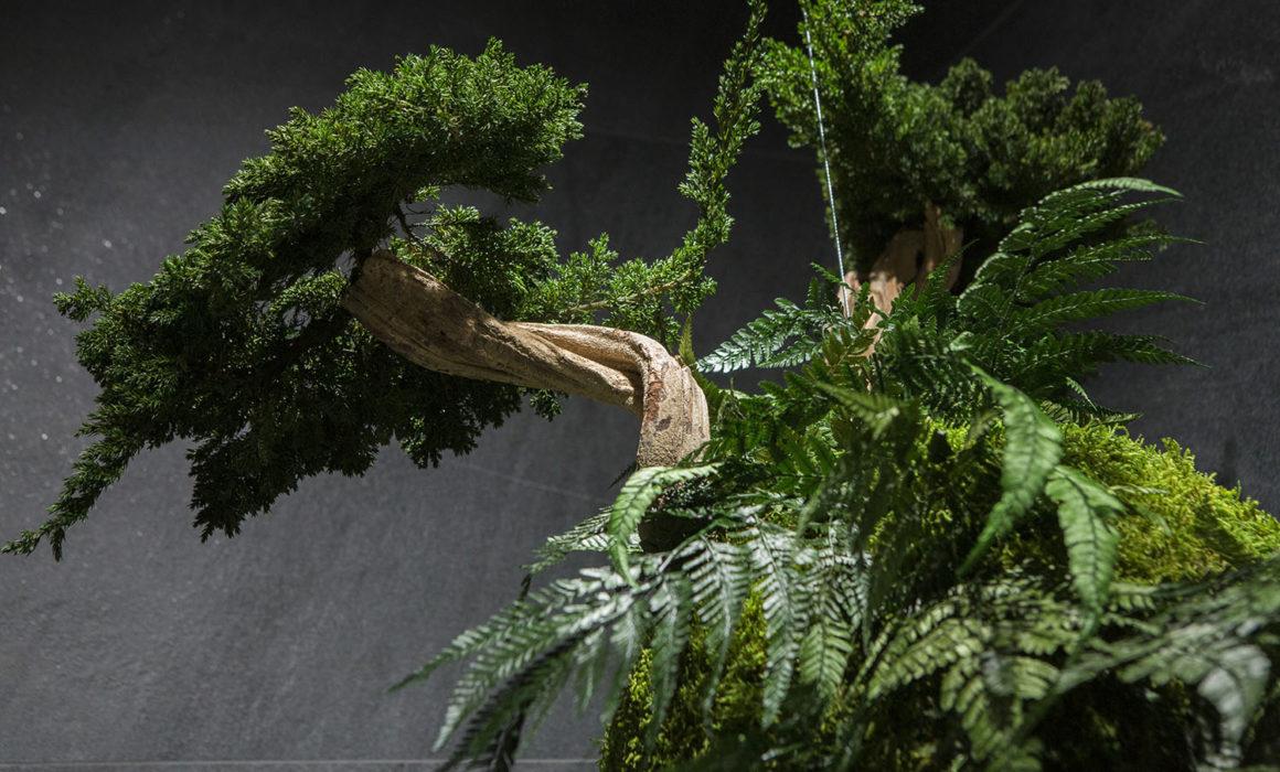 hanging preserved plant decoration