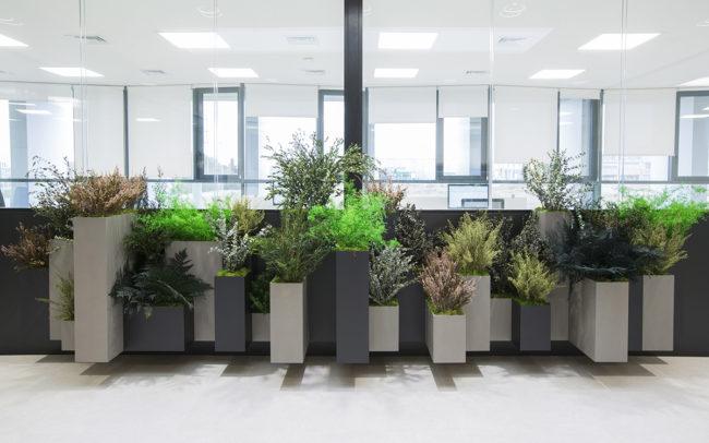 Biofilia en oficinas con jardineras a medida de plantas preservadas