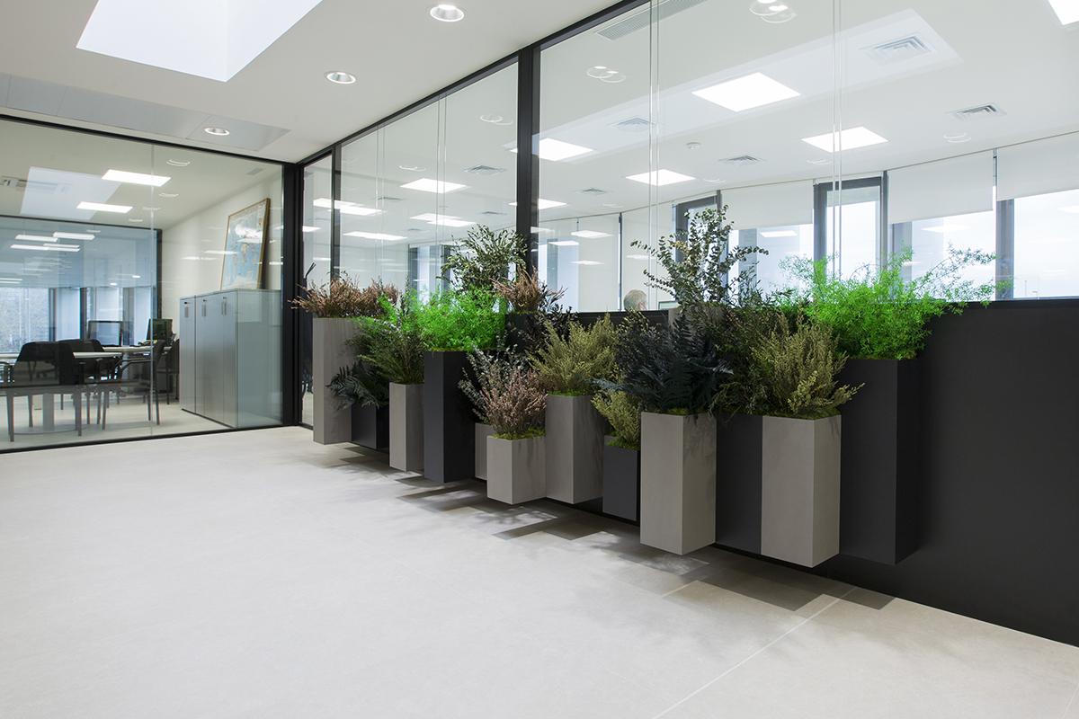 Biofilia en la oficina con jardineras a medida con plantas naturales preservadas