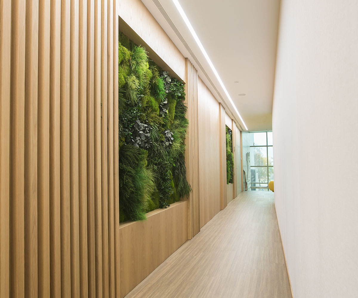 design of biophilic offices with preserved vertical gardens