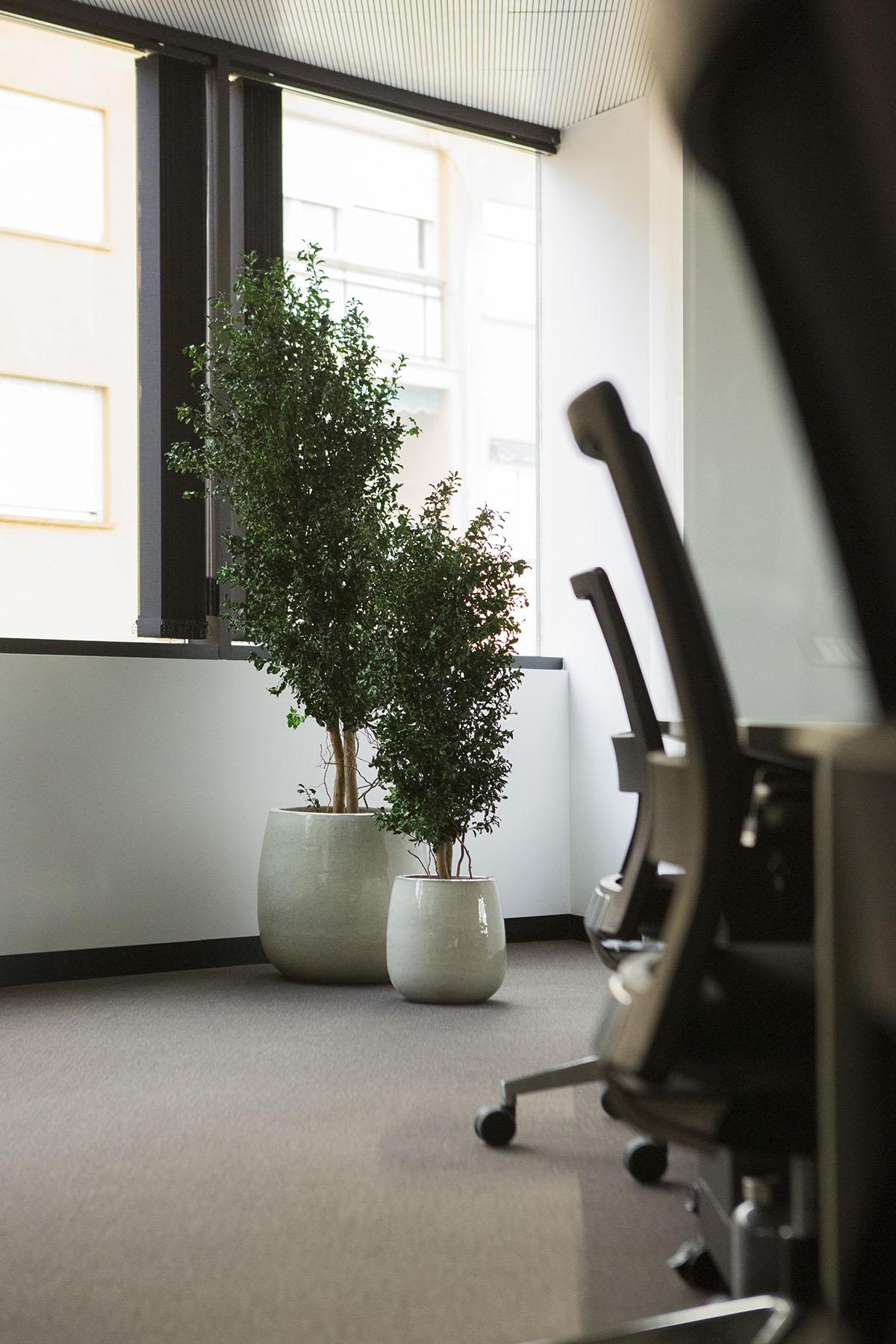 árbol preservado decoración oficinas