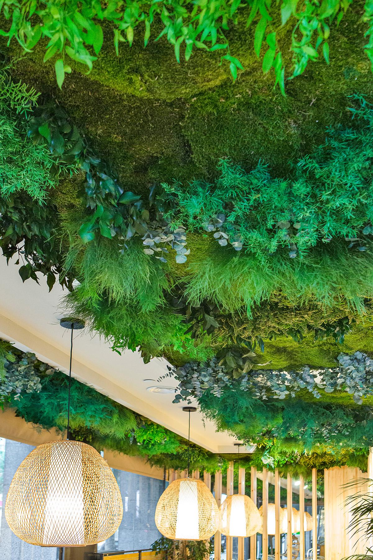techo vegetal preservado sin riego