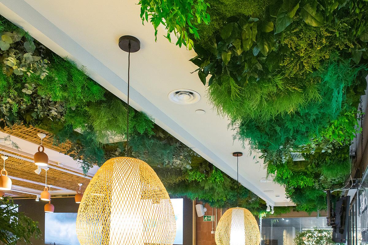 techos vegetales preservados sin mantenimiento
