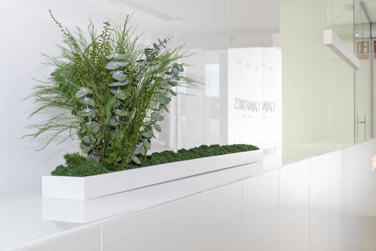 jardinera-oficinas-sin-riego-