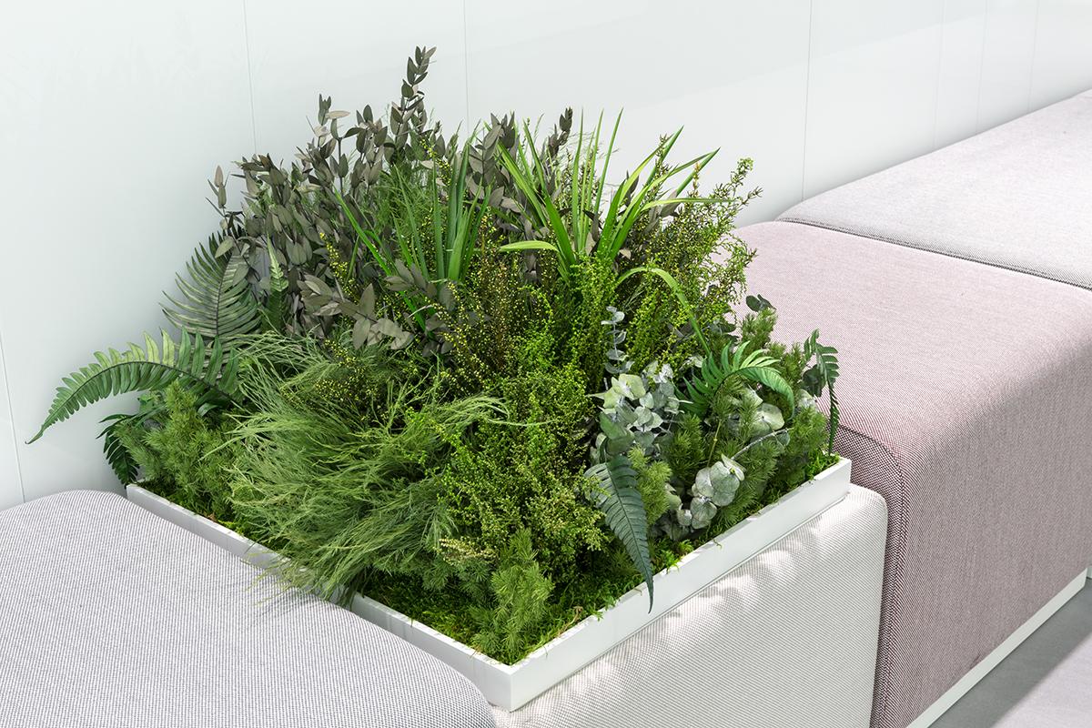 plantas-preservadas-jardinera-sinmantenimeinto