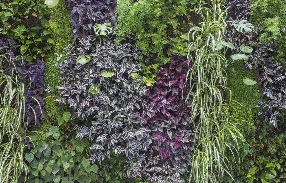 Jardín vertical vivo edificio plantas