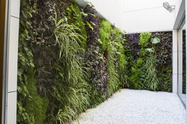 Jardín vertical vivo edificio