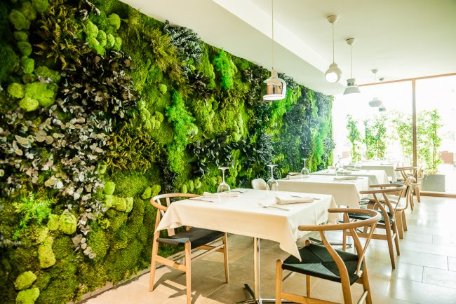 jardín vertical preservado en hotel OD Talamanca Ibiza