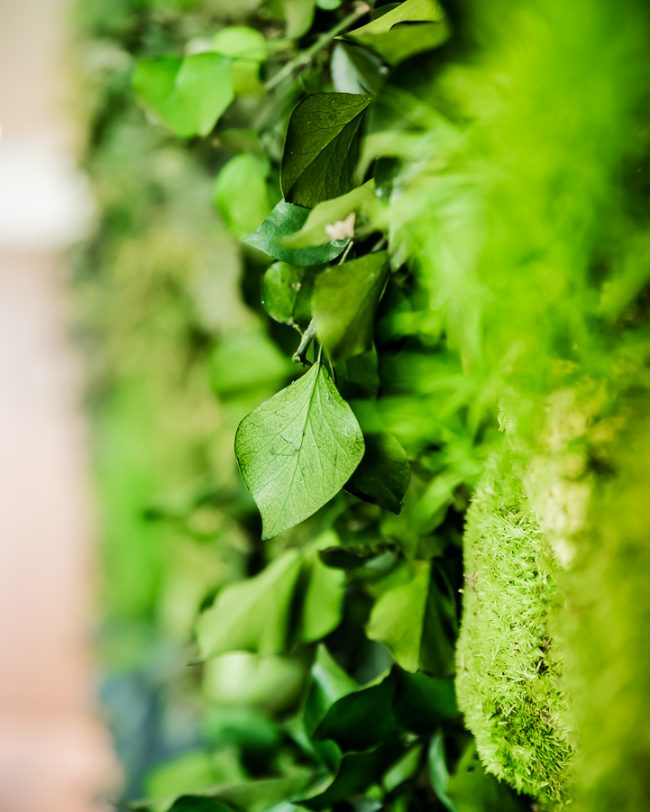 Detalles-greenery-decoracion-plantas-interior-greenarea