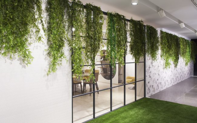 Home greenarea - Plantas colgantes interior ...