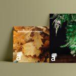 nueva-imagen-greenarea-decoración-vegetal